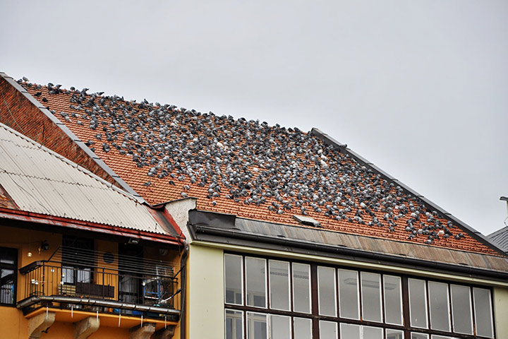 A2B Pest Control are able to install spikes to deter birds from roofs in Soho.