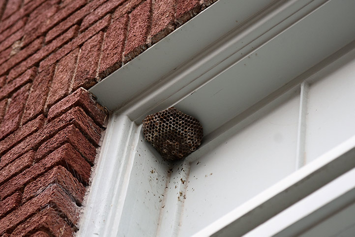 We provide a wasp nest removal service for domestic and commercial properties in Soho.